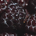 Boysenberries_iS