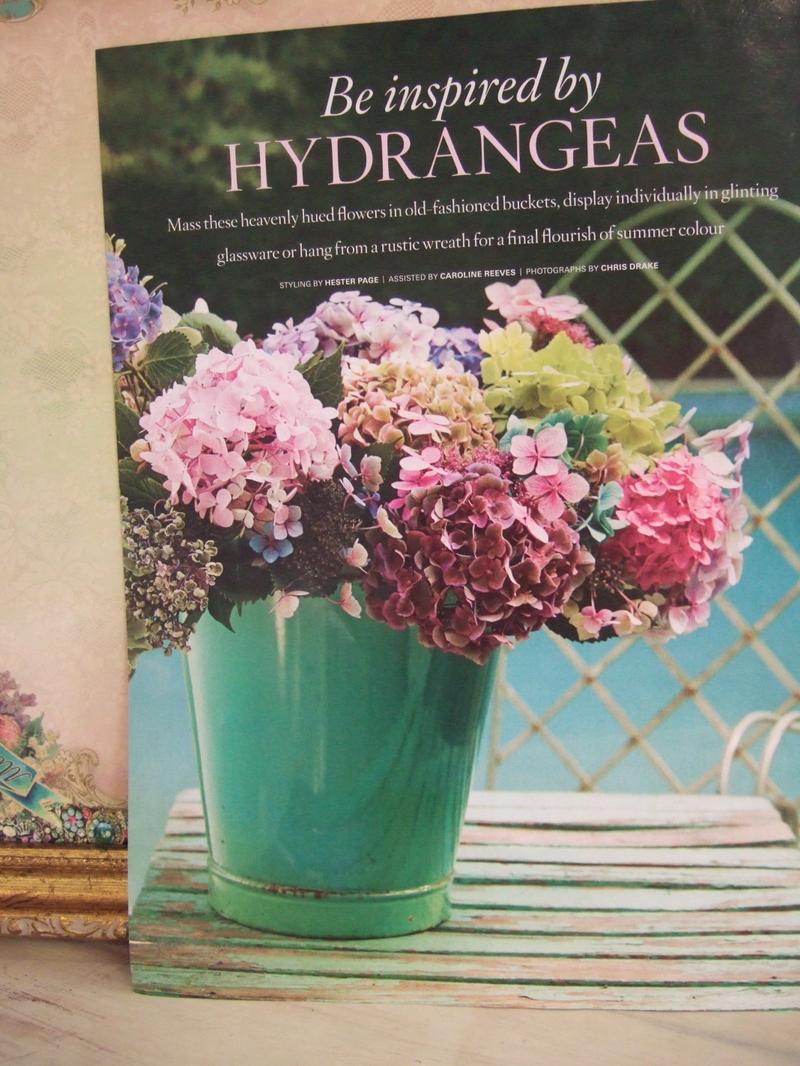 Hydrangea_photo